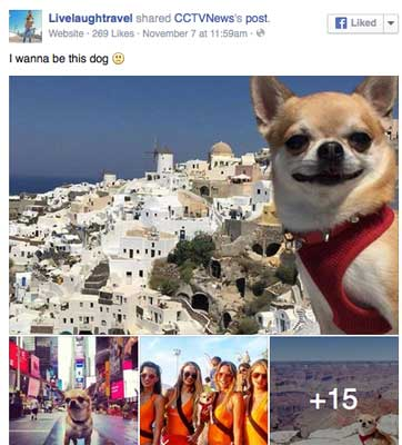 travel-dog-pet