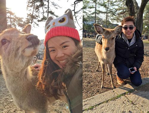 nara-deer-park-japan
