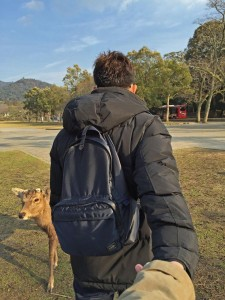 Travel-Nara-Deer-Park